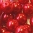 Picture of BD16R5  16mm RED opaque round plastic beads